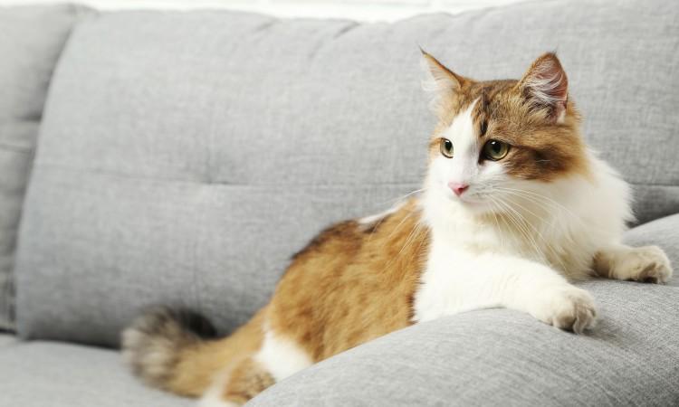 limpiar pelos de mascota del sofá