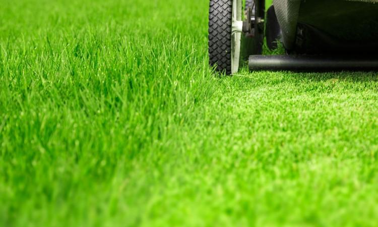 41779309 - lawn mower on green lawn